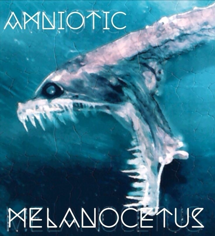 AMNIOTIC - MELANOCETUS | Single out on:                amnioticofficial.bandcamp.com/album/melanocetus - from @amniotic   #amniotic #melanocetus #single #amnioticofficial #bandcamp #digital #download #electronic #dance #independent #music #sound #edm #original #official #amnioticsound #amnioticmusic #new #album #preview #musicforcyborgs   (©AMNIOTIC 2016)
