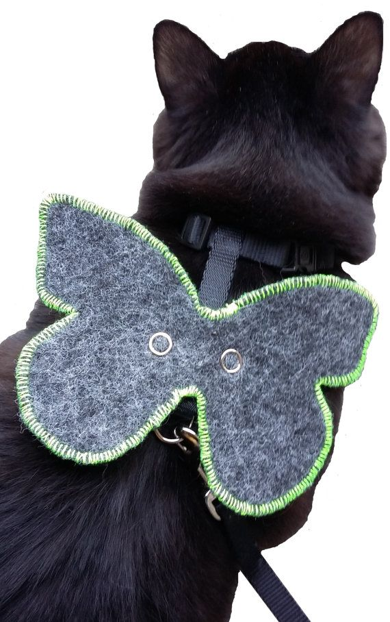 Cat jewellery you can fasten to a harness MARIPOSA B.O.