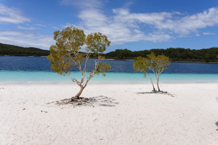 https://flic.kr/p/R1VoLX | Fraser Island, Australia - Lake McKenzie | Lake McKenzie (Boorangoora) is a perched lake on Fraser Island in Queensland, Australia. The lake is located in the Great Sandy National Park. The lake is located 6.2 km southeast of Kingfisher Resort. It is 1,200 metres long and up to 930 metres wide. It is approximately 150 hectares in area. The sands around the lake are composed of pure, white silica and the water in the lake is also so pure it is unsuitable for many…