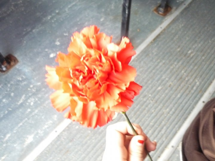 Mine-Just a lovely flower someone gave me & i loved the contrast of my bus's gray floor to its lovely red