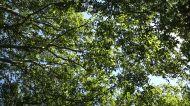 Trees on sky stock video 74652295 - iStock