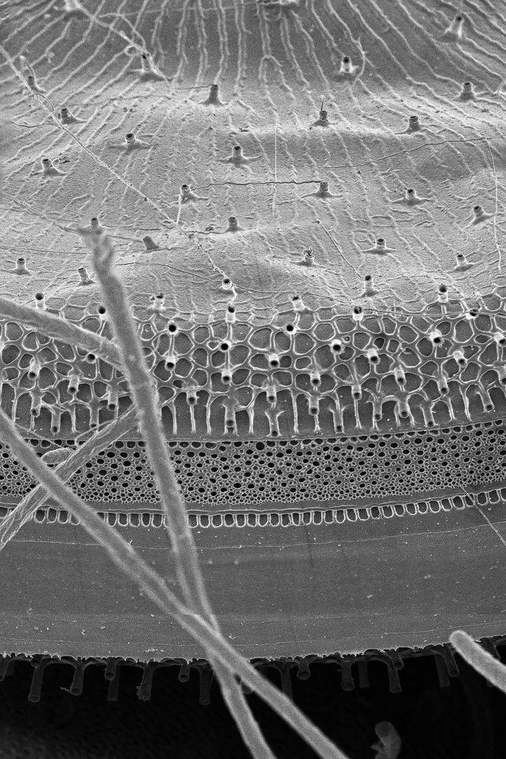 eclipse e100 led educational upright microscopes