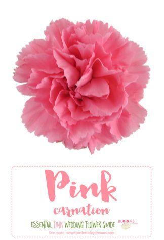 Essential Pink Wedding Flowers Guide Names Seasons Pics