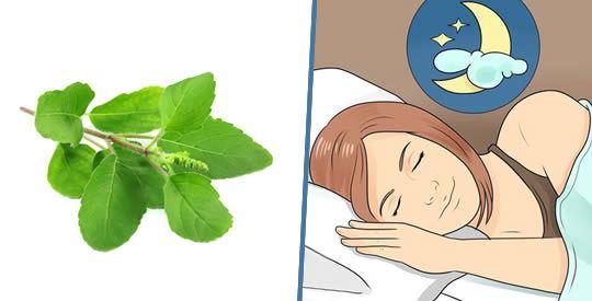 Basilico sacro: un rimedio contro l'insonnia | Rimedio Naturale
