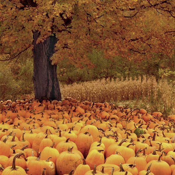 Pumpkins, Vermont, USA by Charlie Waite