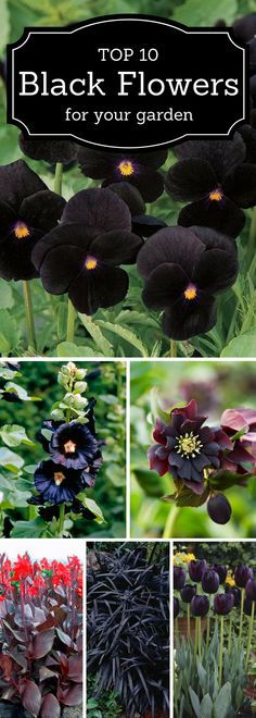 A fun little idea board for outdoor gardening with dark purple and black flowers