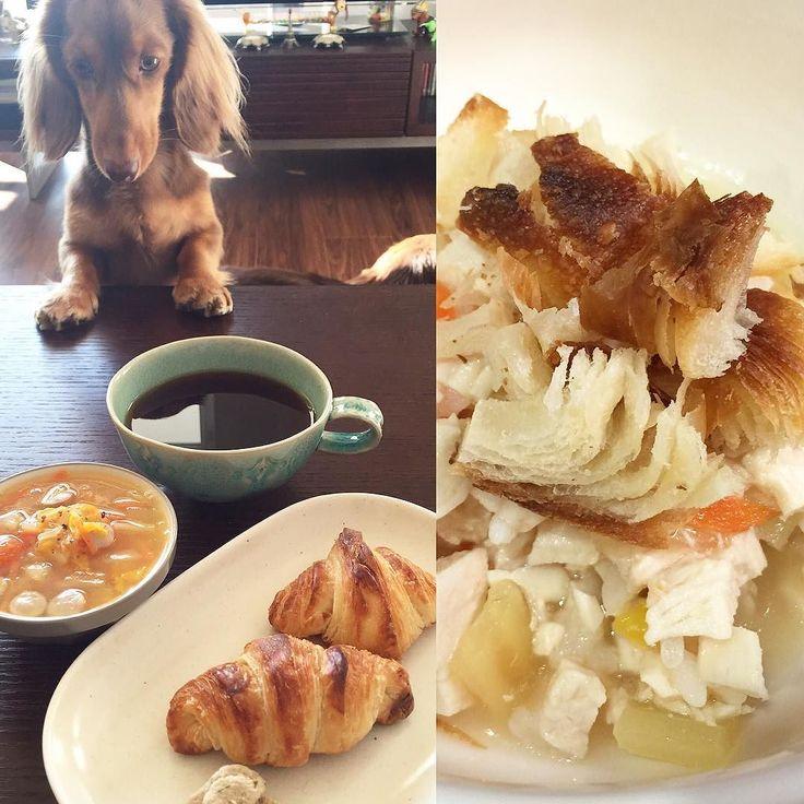 Croissant for breakfast.  おばば手作りのクロワッサンが3つあり3つは食べられないなぁと思ったので一家にもおすそ分け(_) みんないつもと違うトッピングにクンクンクンクン . #ダックス #短足部 #多頭飼い #チョコタン #チョコクリ #犬バカ部 #ワンコなしでは生きて行けません会 #おひとりさまワンコ部 #おひとりさまワンコごはん部 #癒しわんこ #犬ごはん #dachs #dachshund #dogsofinstagram #dachstagram #instadachshund #doxie #ふわもこ部 #エンジェルわんず倶楽部 #おひとりさまとローズ一家