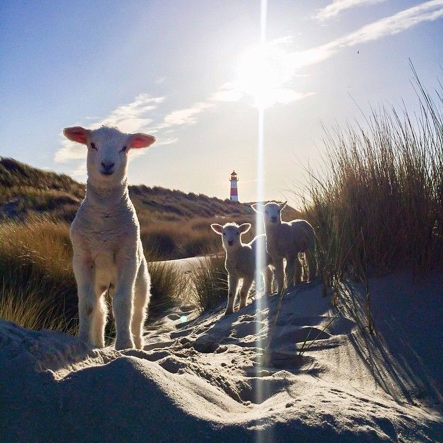 """made some friends on #sylt.""  echt süß"
