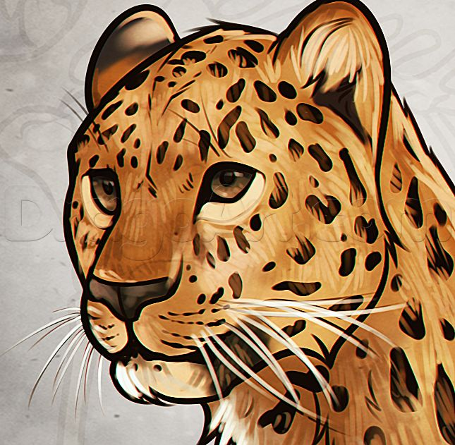 leopard-anatomy-drawing_1_000000021529_5.png (645×631)