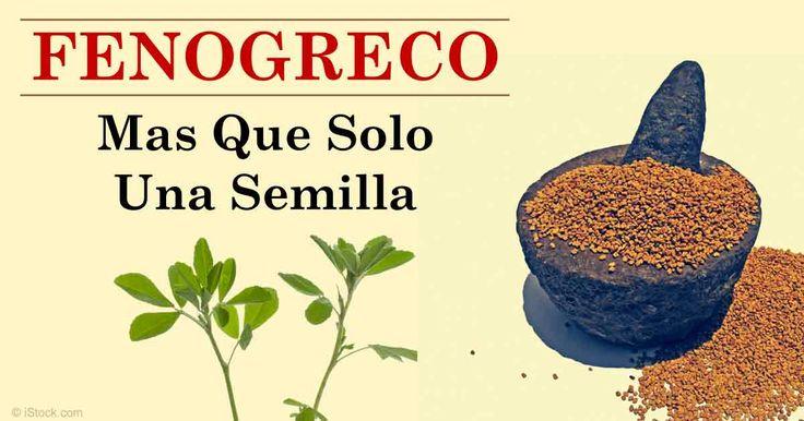 Descubra más sobre los beneficios de fenogreco, propiedades de la fenogreco, recetas saludables y más con el fin de enriquecer su alimentación. http://alimentossaludables.mercola.com/fenogreco.html