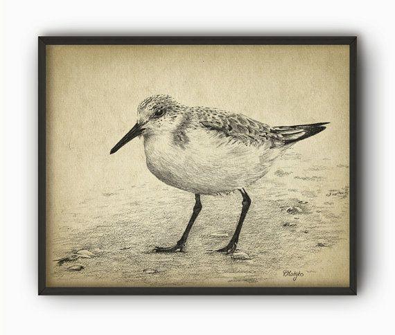 Sandpiper Bird Art Print from an Original Pencil by QuantumPrints