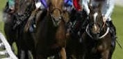 Horse Racing Tipsters | Horse Racing System