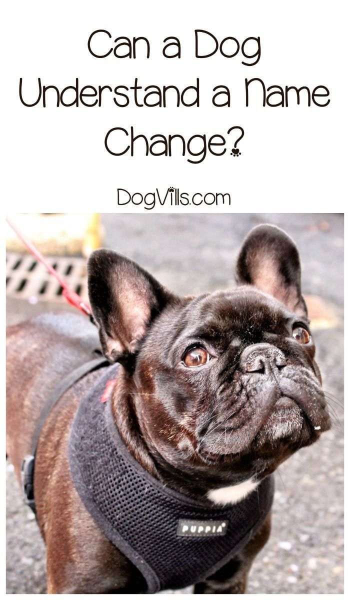 Can A Dog Understand A Name Change Dog Training Dog Behavior