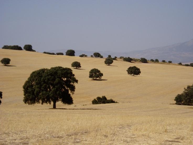 Andalucía - landscape