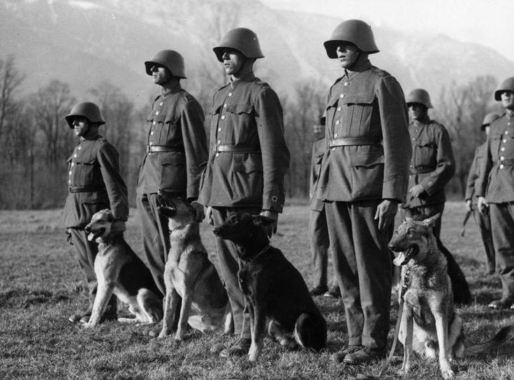 Hundestaffel: Training für Armeehunde bei der Schweizer Armee im Dezember 1937 in Bern.