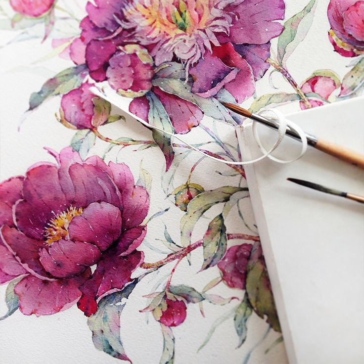 Peonies in watercolor on Behance
