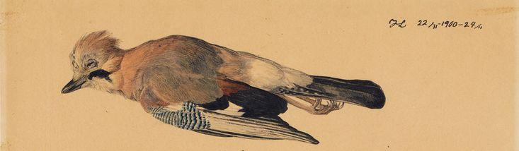 Johannes-Larsen-Studier-af-en-død-skovskade-1900-Ordrupgaard.jpg (1000×292)