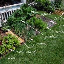 front yard garden layout. rip out the shrubs and plant a vegetable garden in front yard. yard layout