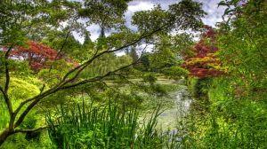 Preview wallpaper green, garden, trees, pond, water-lilies, flora 1920x1080