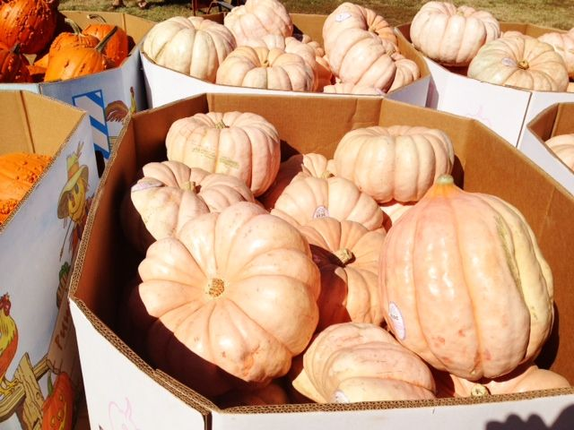 Wisdom: Pink Pumpkins For Halloween