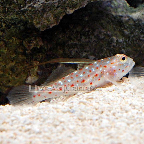 Pin On Fish Tanks