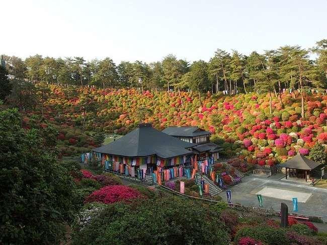 Azaleas in full bloom in Shiofune Kannon-Ji temple, Ome, Japan l Photo Guilhem Vellut