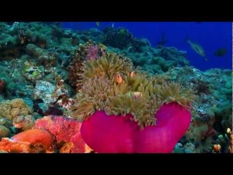 Magia Wielkiego Błękitu - Siedem Kontynentów -Australia i Oceania - YouTube