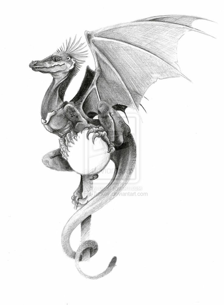 576 best images about dragons black white on pinterest for Little dragon tattoo