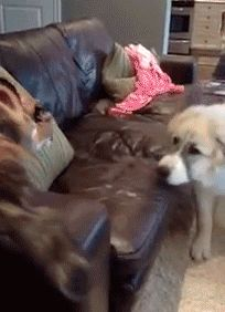 "I like the look on the dogs face when the cat is finished ""did anyone see that?"""