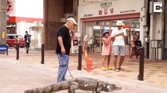 This Japanese man takes his pet caiman for a walk  Credit: Caters News Agency #news #alternativenews
