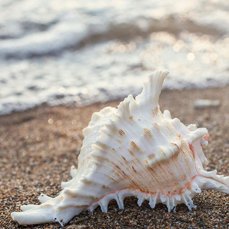 Seashell Number 2 – Fine Art Beach and Ocean Photography. – Natalie Photography