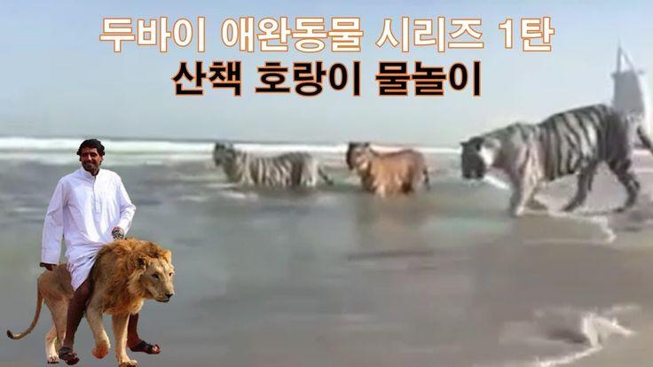 두바이 애완동물 시리즈 1탄 호랑이 Dubai Pet Tiger