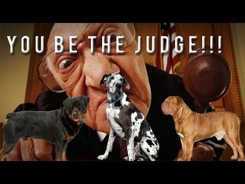 YOU BE THE JUDGE: GREAT DANE ROTTWIELER DOGUE DE BORDEAUX - http://www.dressmypup.net/2017/06/03/you-be-the-judge-great-dane-rottwieler-dogue-de-bordeaux/ #cutepuppies #funnydogs #cuteanimals #funnyanimals #puppies