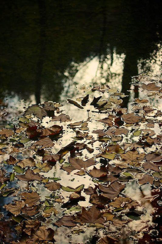 El lago de los patos