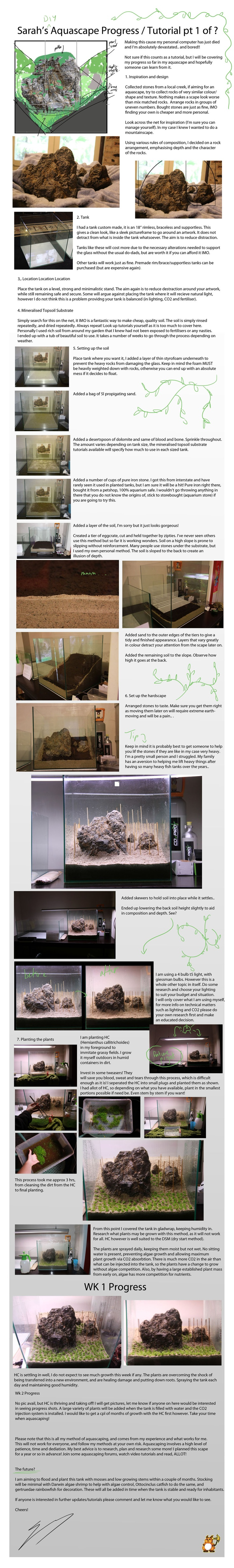 207 best Aquascaping images on Pinterest