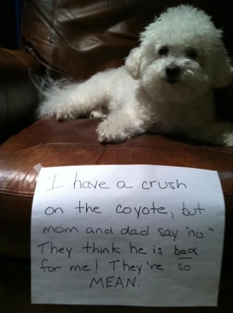 Sign Says, I Have A Crush On The Coyote, But Mom And Dad -5239