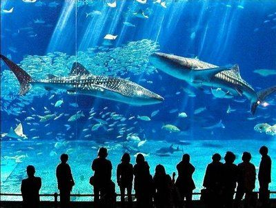 Churaumi Aquarium (Okinawa)