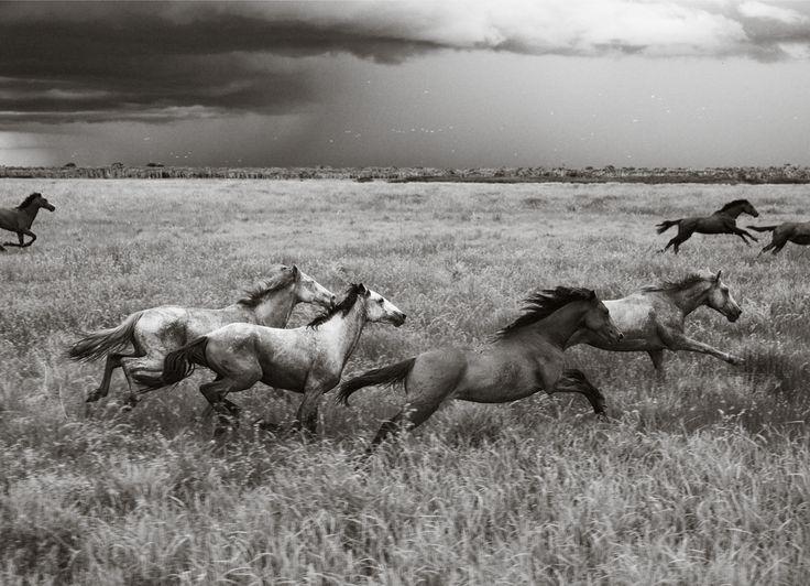 Got me some horses