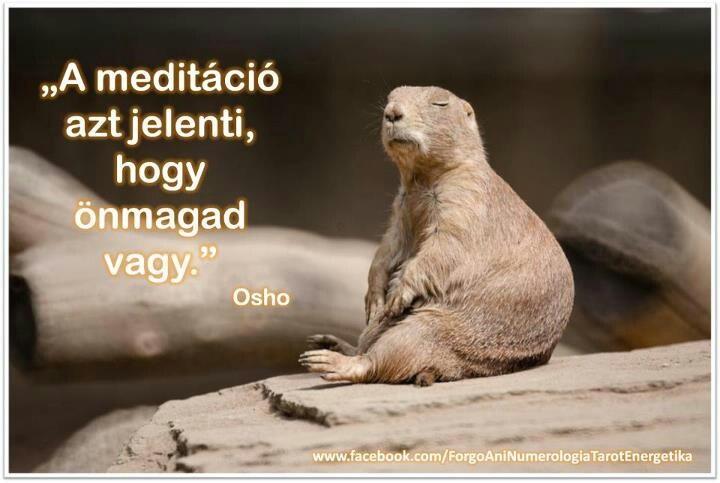 www.facebook.com/ForgoAniNumerologiaTarotEnergetika