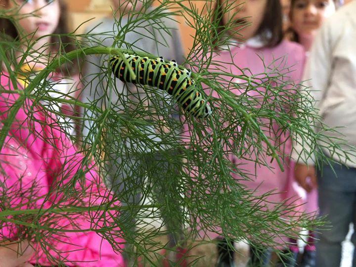 Se questo è il bruco come sarà la farfalla?!!! The caterpillar! We wait for the butterfly!