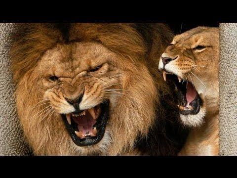 Эксклюзив Нецензурный Рык Льва. Парк флоры и фауны Роев Ручей