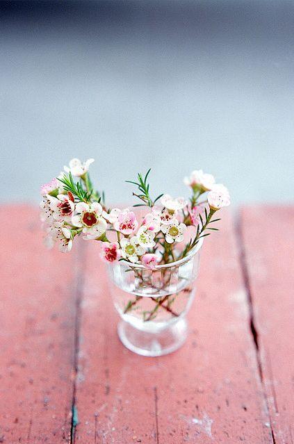 Sprigs of pink & white Waxflower <3