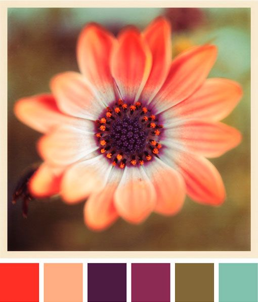 How do you go about selecting a color scheme to use in your designs? Have you considered using photographs of nature in your color sheme ventures?  This picture highlights the peach, white, orange and purple in the flower without forgetting the greenery background.