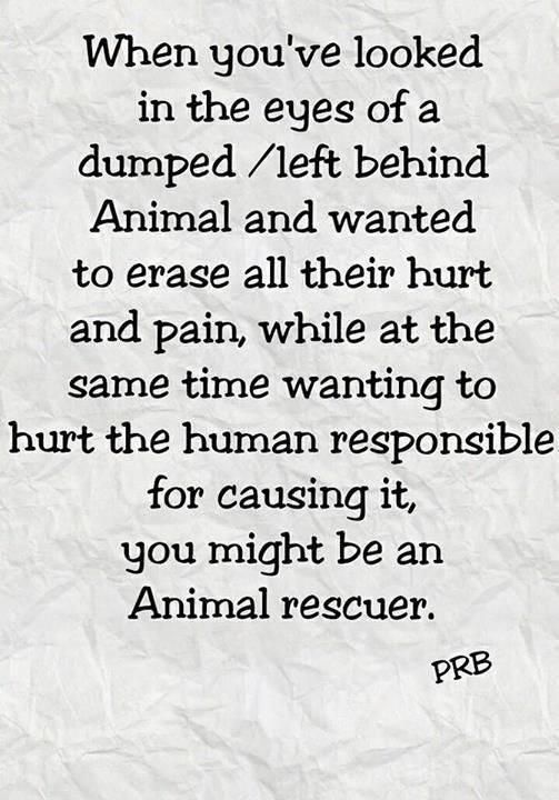 When you've looked in the eyes of a dumped/left behind animal and wanted to erase all their hurt and pain, while at the same time wanting to hurt the human responsible for causing it, you might be an animal rescuer.