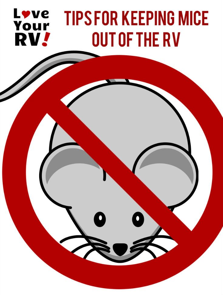 Tips to Keep Pesky Mice Out of Your RV from the Love Your RV! blog - http://www.loveyourrv.com/tips-keep-mice-rv/ #RVing #RVlife