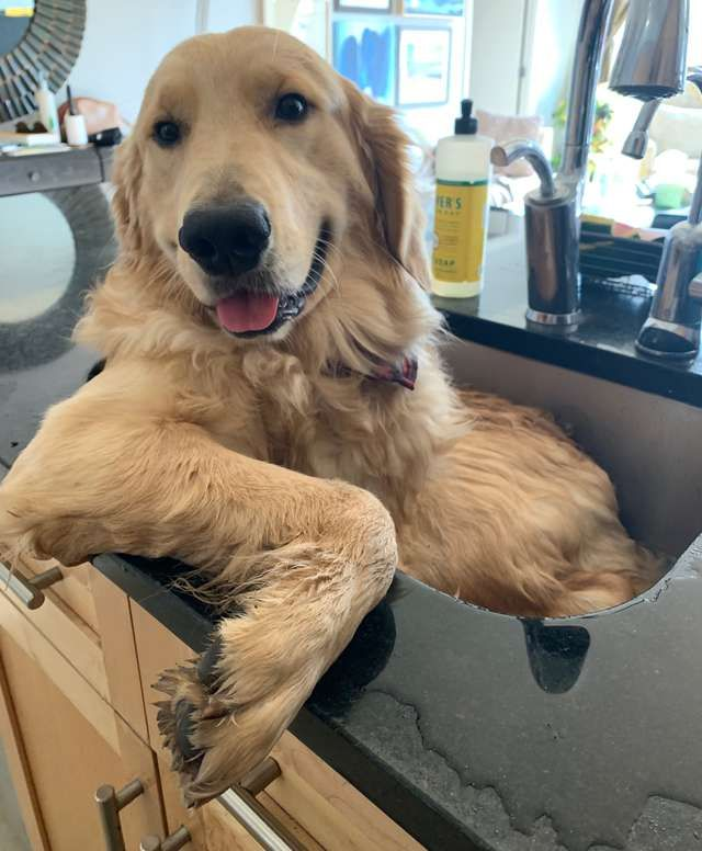 Silly Dog Refuses To Bathe Anywhere Except For His Favorite Sink