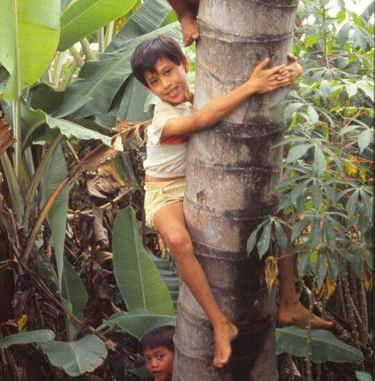Kids climbing coconut tree...so fun!!