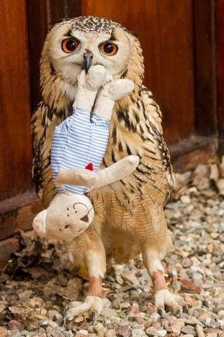 owl +