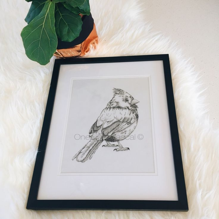 OneLittleRascal - ✖ LITTLE BIRDY✖ Coloured pencil drawing.  Limited edition prints. Individually signed and numbered.  Available for purchase in a range of sizes as a Giclée Fine Art print.