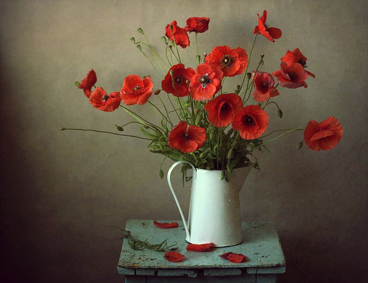 Poppies - Photo by Алена Шибко [Alena Shybko]